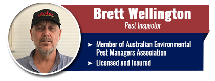 brett-wellington-1.png