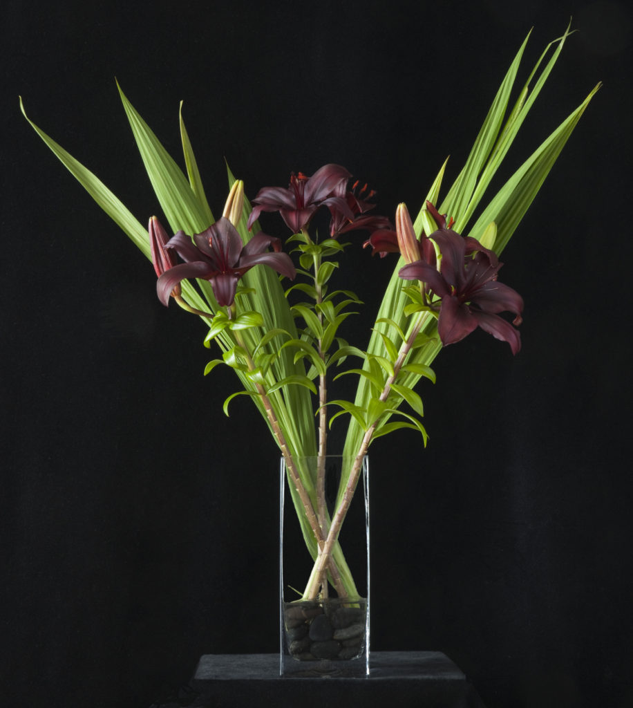 Burgundy Asiatic Lilies