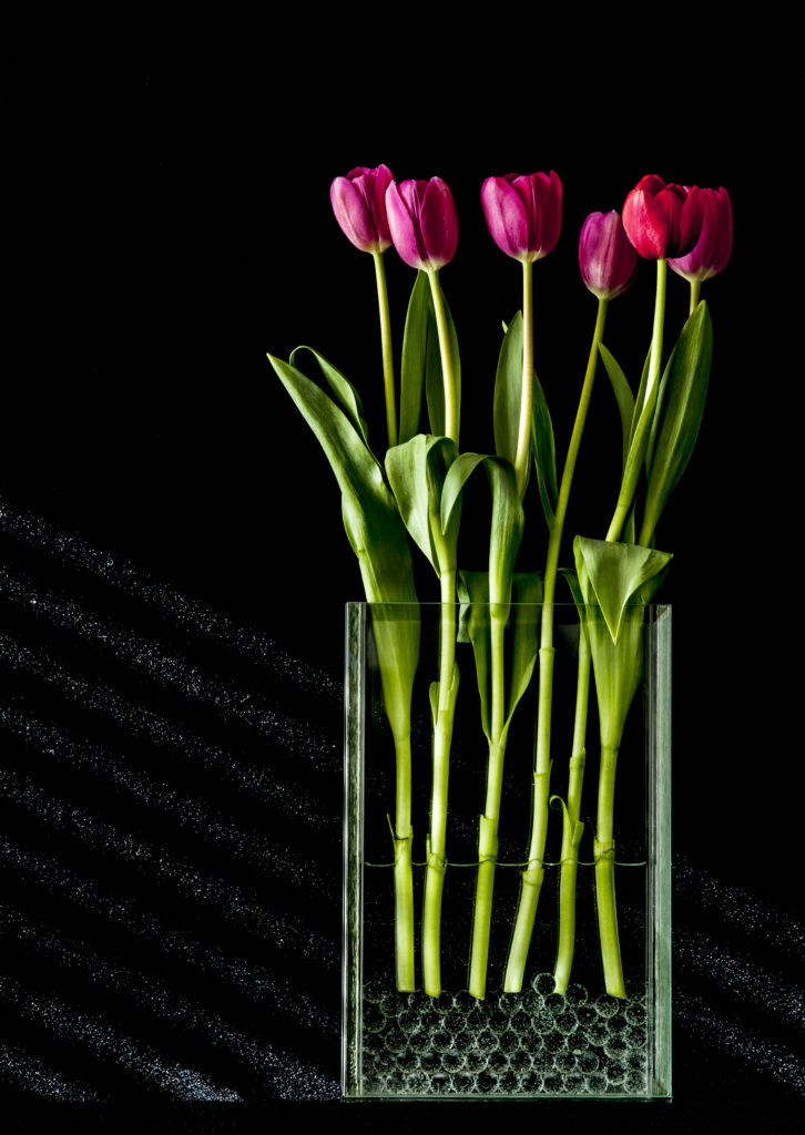 Six Red Tulips