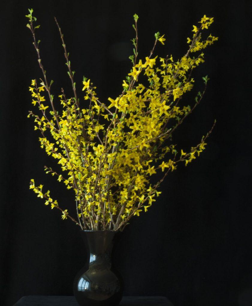 Forsythia in a Black Vase