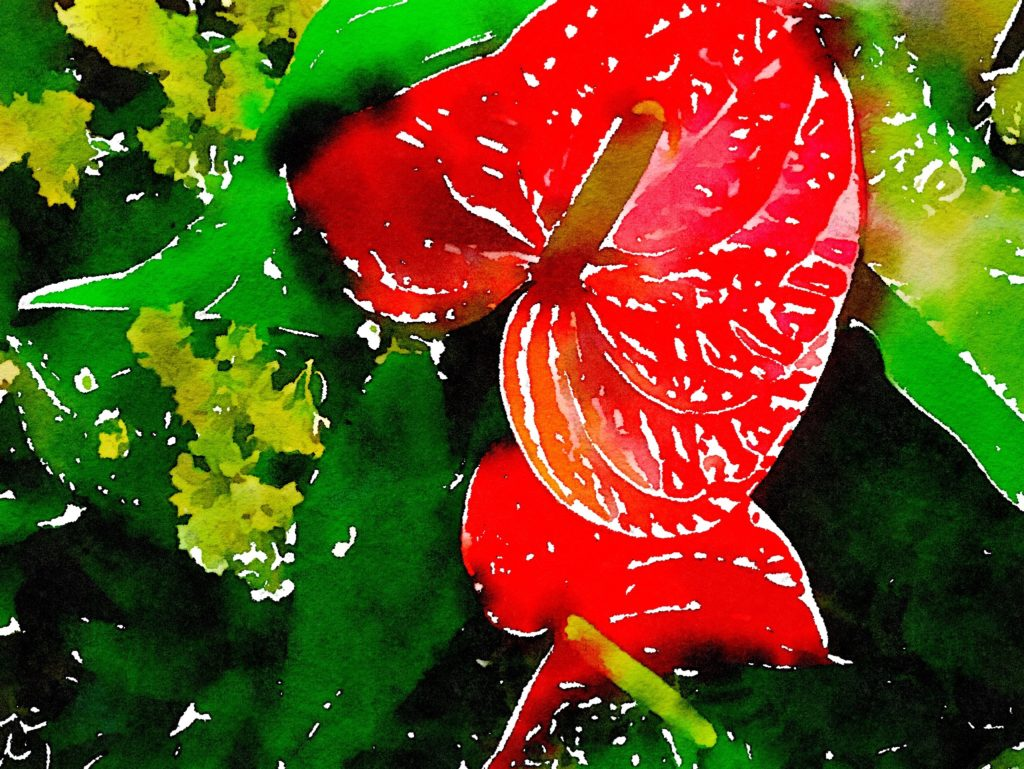Red Peace Lilies in Waterlogue