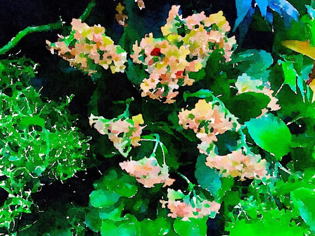 Small Pink Flowers in Waterlogue
