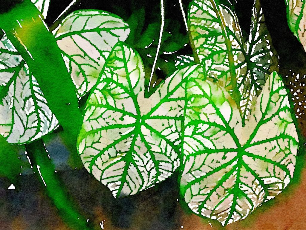 Three White and Green Leaves in Waterlogue