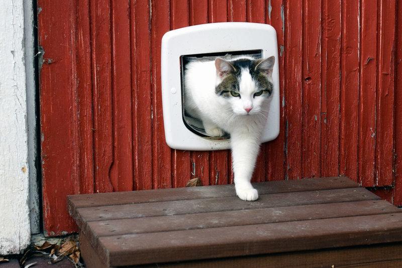 installing a pet door in your garage door