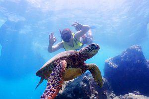turtle-tours-hawaii