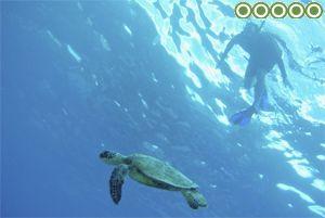 hawaii-real-nature-tours-reviews
