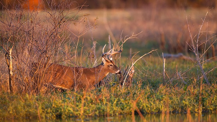 Backcountry hunters and anglers hosting deer hunting field day