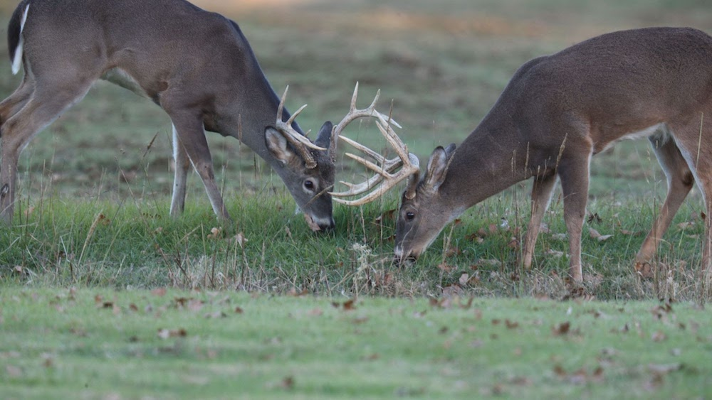 Shed some light on your scouting with the 2020-21 Deer Summary Report