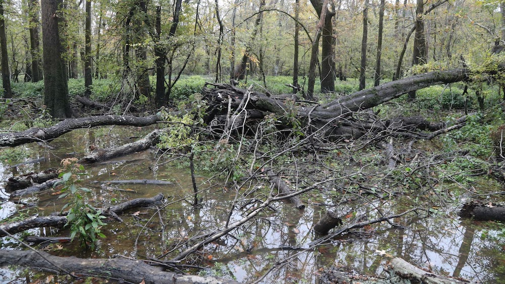 AGFC adjusts water management to protect critical duck habitat