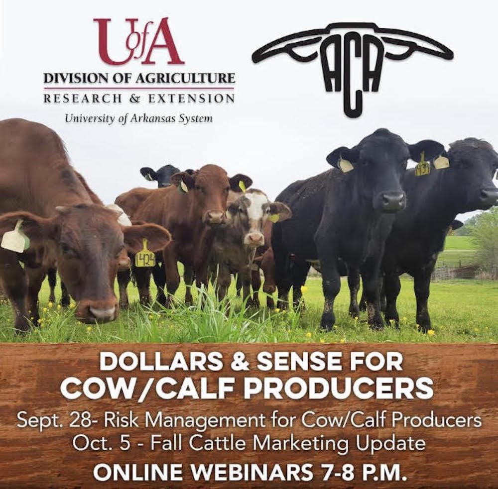 Cattle producers' webinars