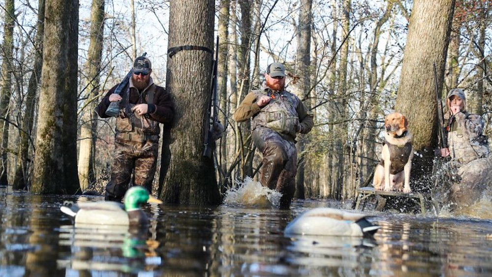 Meetings scheduled to provide details on duck season water level and forest management changes