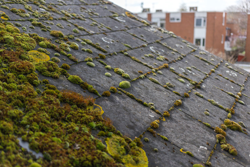 What Is Roof Algae And How To Fix It?