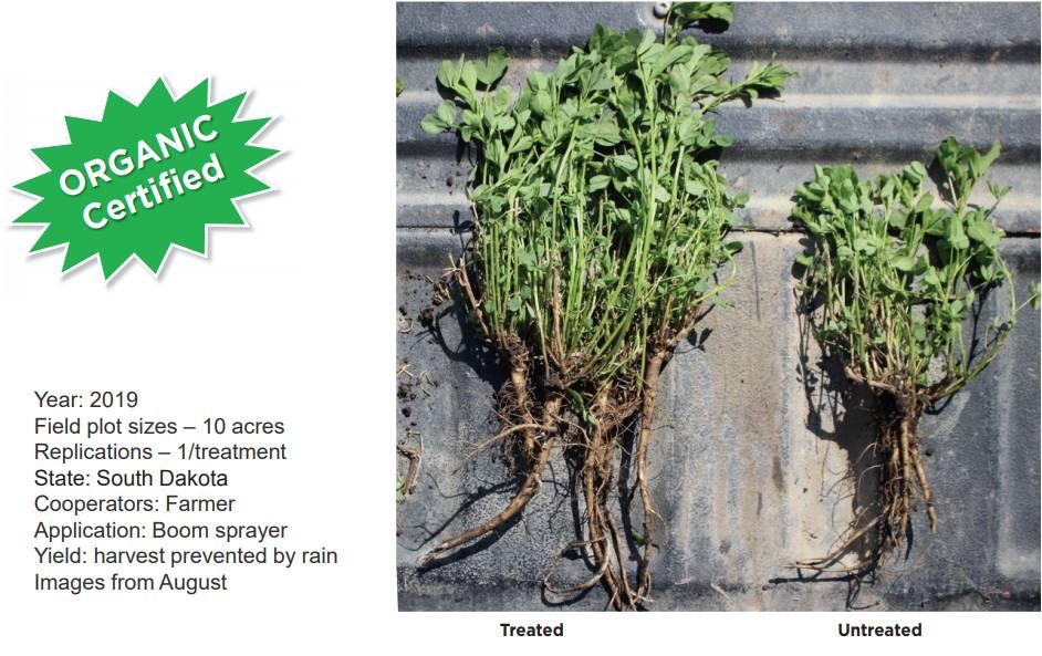 Synergy between BioEnsure® and BioTango on Alfalfa