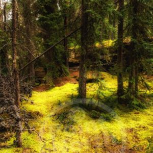 Point North Photography-Jeff Wier-Quiet Place in the Forest