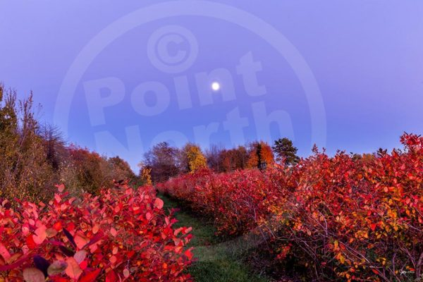 Point North Photography-OCTOBER MOON