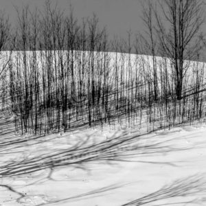 Point North Photography-TILL SPRING