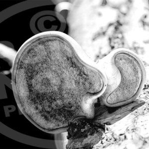 Point North Photography-TREE FUNGI