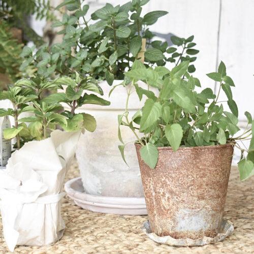 5 easy ways to use fresh herbs
