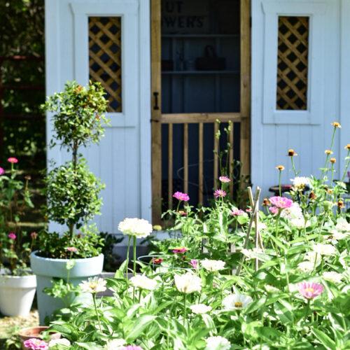 summer flower garden tour