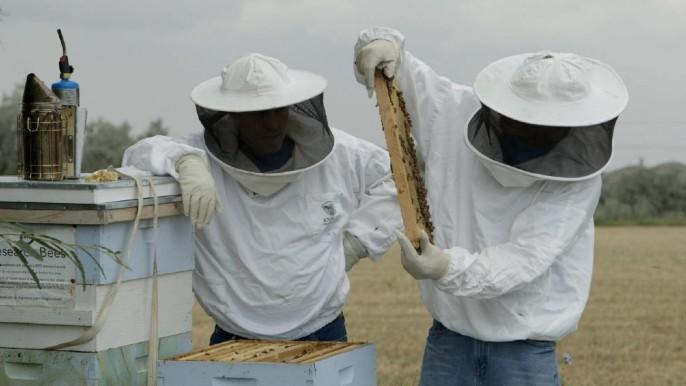 Beekeepers (Brian Wilcox)