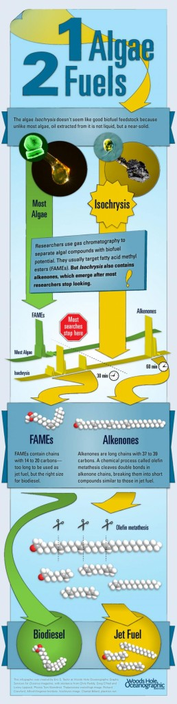 Biofuel: Infographic courtesy of Eric Taylor, Woods Hole Oceanographic Institution