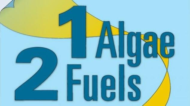 Biofuel: Inforgraphic courtesy of Eric Taylor, Woods Hole Oceanographic Institution