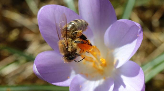 Winter Bee (Steven Spence); bees make honey
