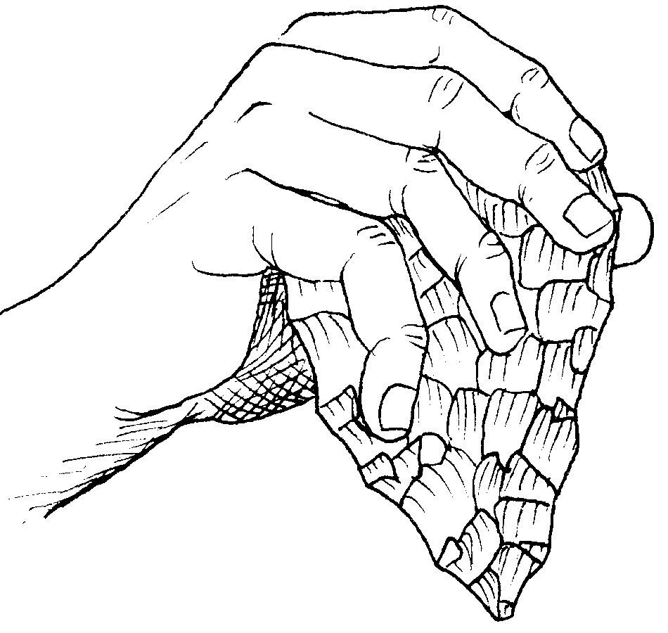 Prehistoric stone tools: Drawing of a hand holding a flint hand axe.