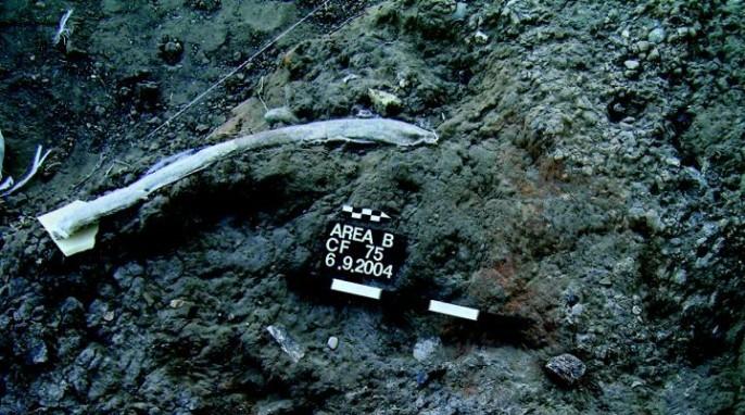 Prehistoric stone tools: An elephant rib bearing marks from flint tools at the Revadim site. (American Friends of Tel Aviv University)