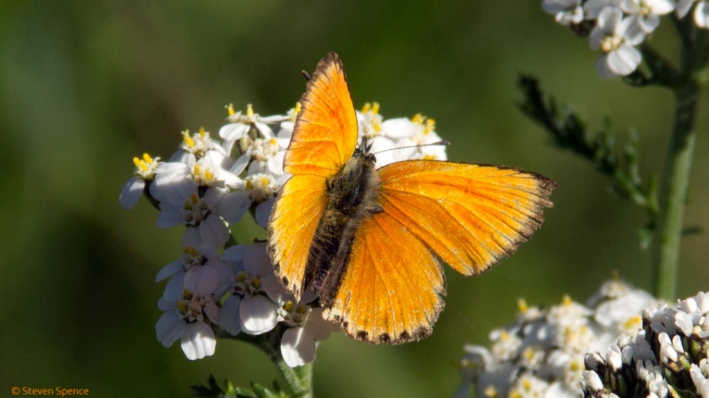 Pollination: butterfly visiting a flower