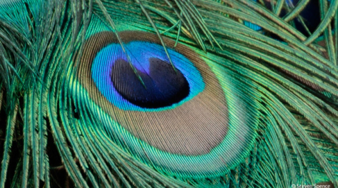 Structural Coloration in Bird Feathers