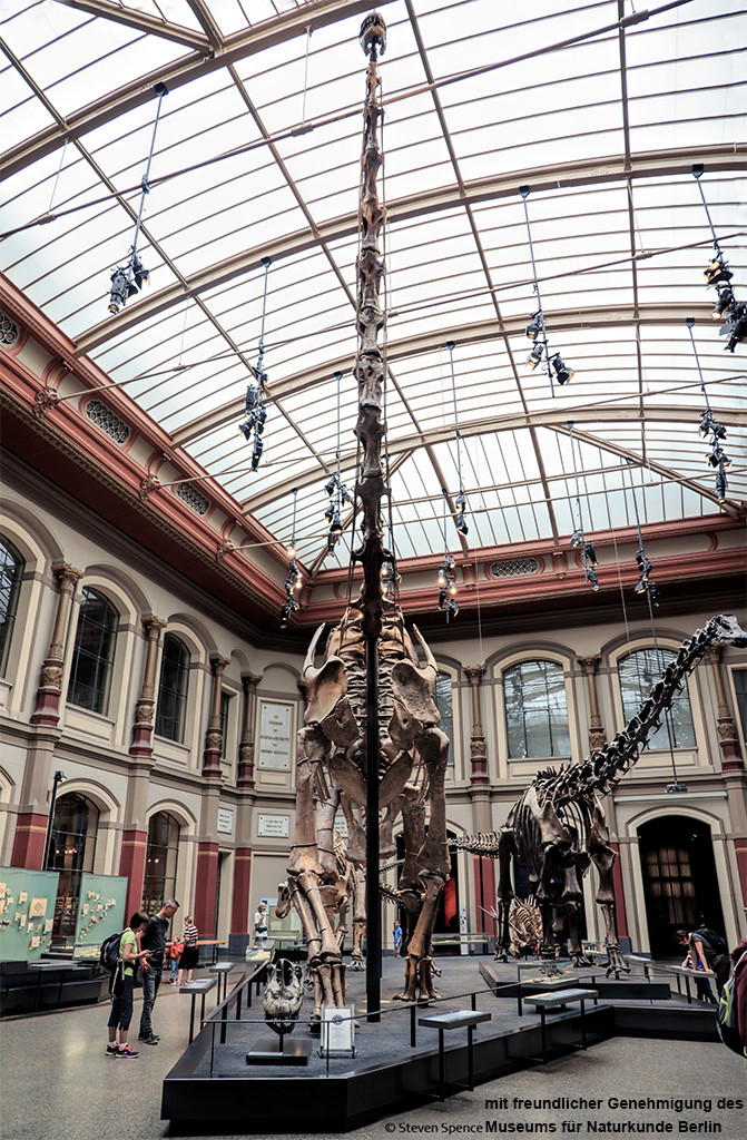 World's Largest Dinosaur Skeleton: The animal is not just long but also tall, with the head nearly reaching the ceiling of the huge hall. (Photo by Steven Spence)