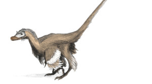 Raptor Dinosaurs: Artist's Digital and graphite restoration drawing of Velociraptor mongoliensis (By Matt Martyniuk GFDL, CC-BY-SA-3.0 via Wikimedia Commons)