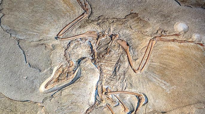 Jurassic Archaeopteryx