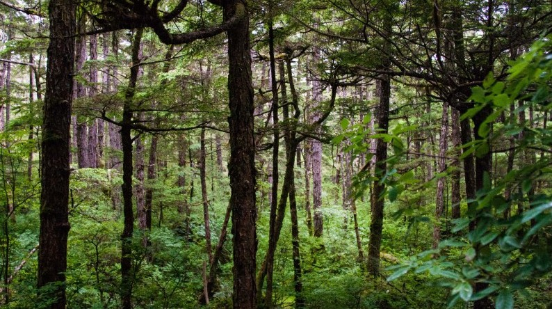 Forests Alone Can't Stop Climate Change