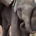 Baby elephants playing, University of Sheffield