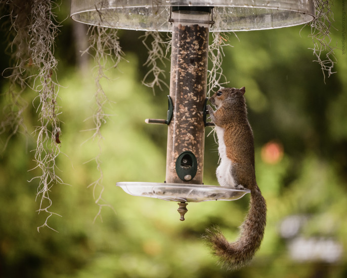 Birds and Bird Feeders: Photo courtesy of Steve Janosik via Flikr