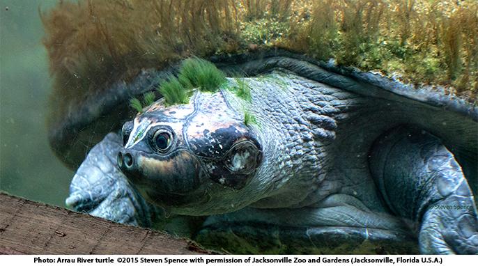 Turtles, Steven Spence