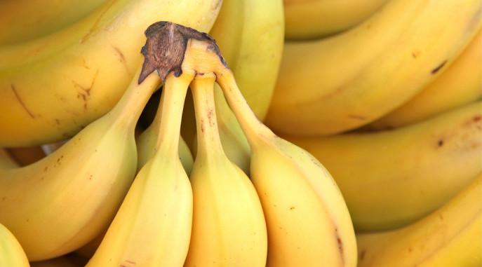Bananas, Panama Disease