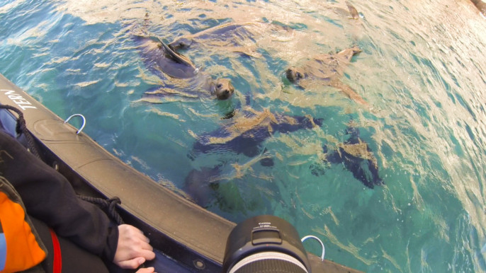 Swimming with Sea Lions, Max Goldberg for GotScience.org