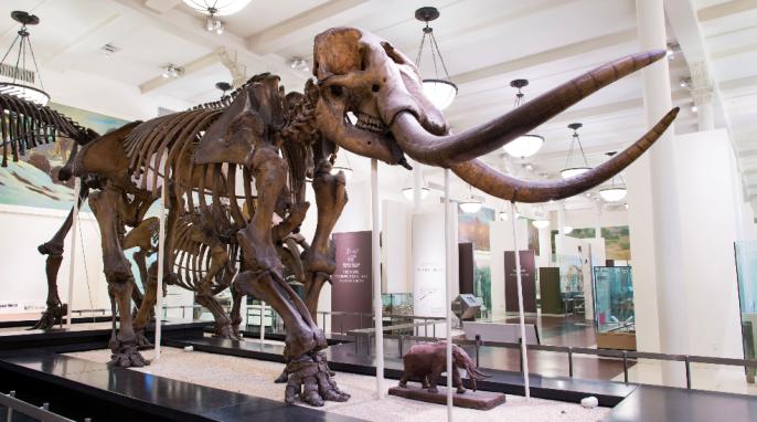 mass extinctions