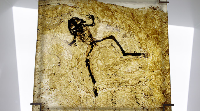 messel fossils: frog