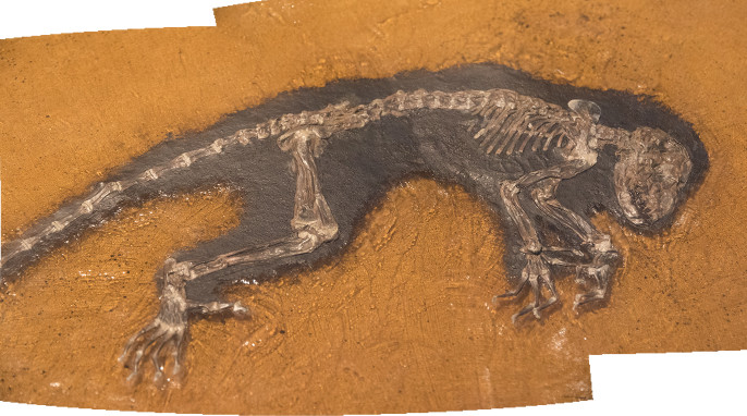 messel fossils