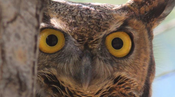 Birds: The Greatest Eyes on Earth