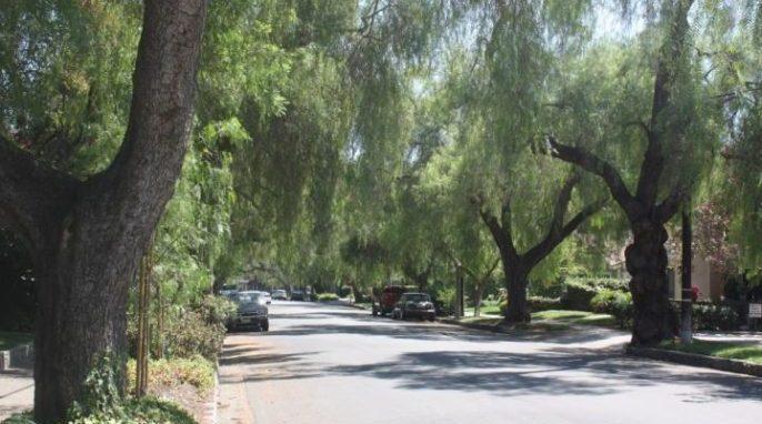 Street Trees in California Valued at $1 Billion