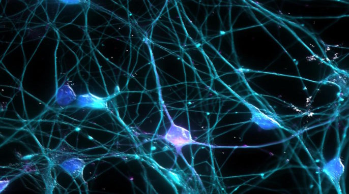 Nests, Neurons, and the Evolution of Behavior. How and Why Do Brain Cells Die?