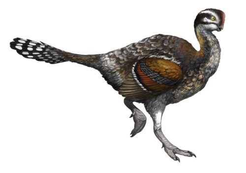 Oviraptor illustration for the campaign and website. © Emily Willoughby