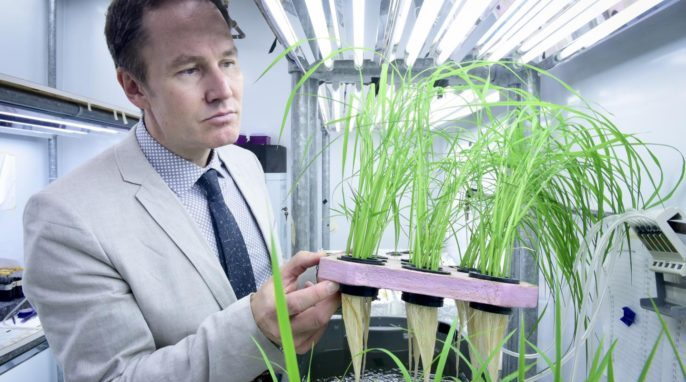 Robust Rice Varieties Cut Costs and Pollution