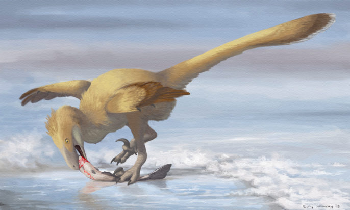 Even the wolf-sized predator Deinonychus may have had fully feathered fingers, perhaps with only the claws protruding. Illustration by the author.