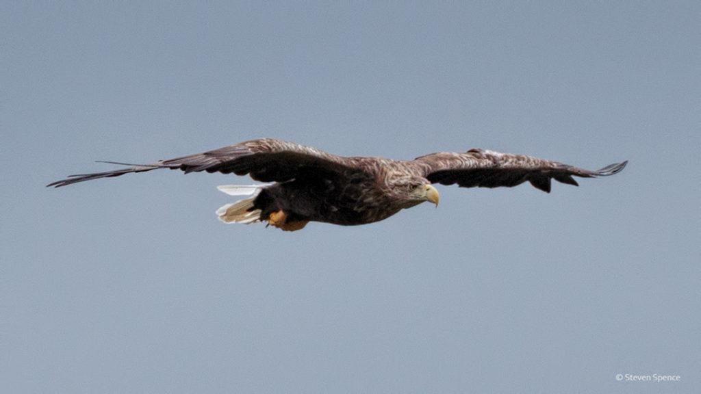 Level flight.